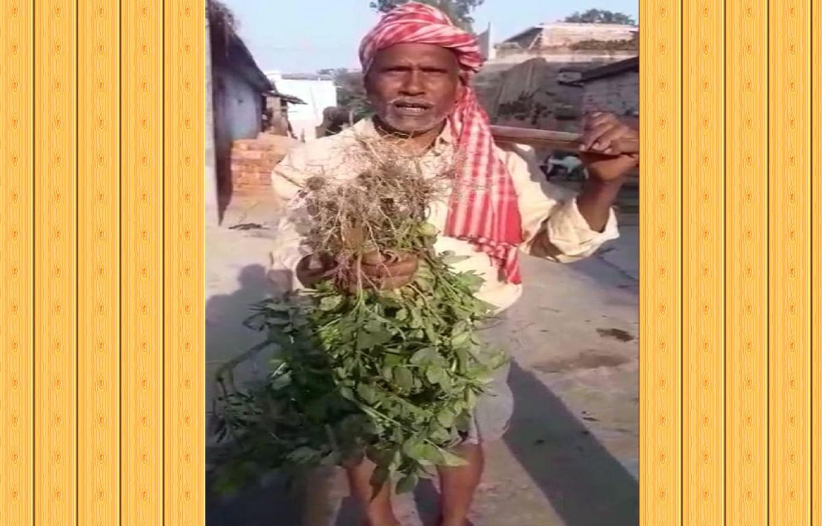 खेती के बाद भी आलू में नहीं निकला कंद, घटिया बीज ने किसानों की बढ़ाई मुश्किलें