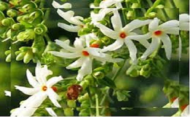 Navratri 2020 : मां दुर्गा के लिए खास है हरसिंगार, अपराजिता और अढ़हूल का फूल, इस बार भागलपुर में कितने लाख का बिकेगा ये फूल...
