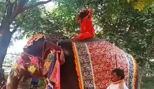 हाथी पर योगाभ्यास करते हुए गिरे योग गुरु बाबा रामदेव, सोशल मीडिया पर वायरल हुआ वीडियो