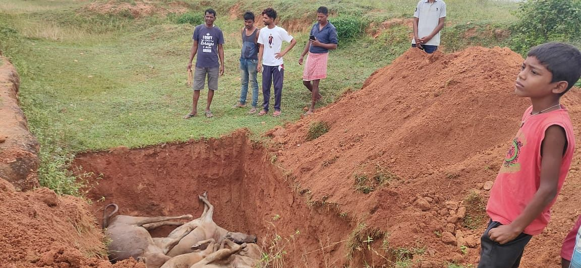 ग्रामीणों ने मृत मवेशियों को मैदान में दफनाया.