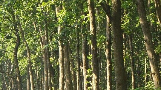 जंगलों पर भारी कंक्रीट साम्राज्य