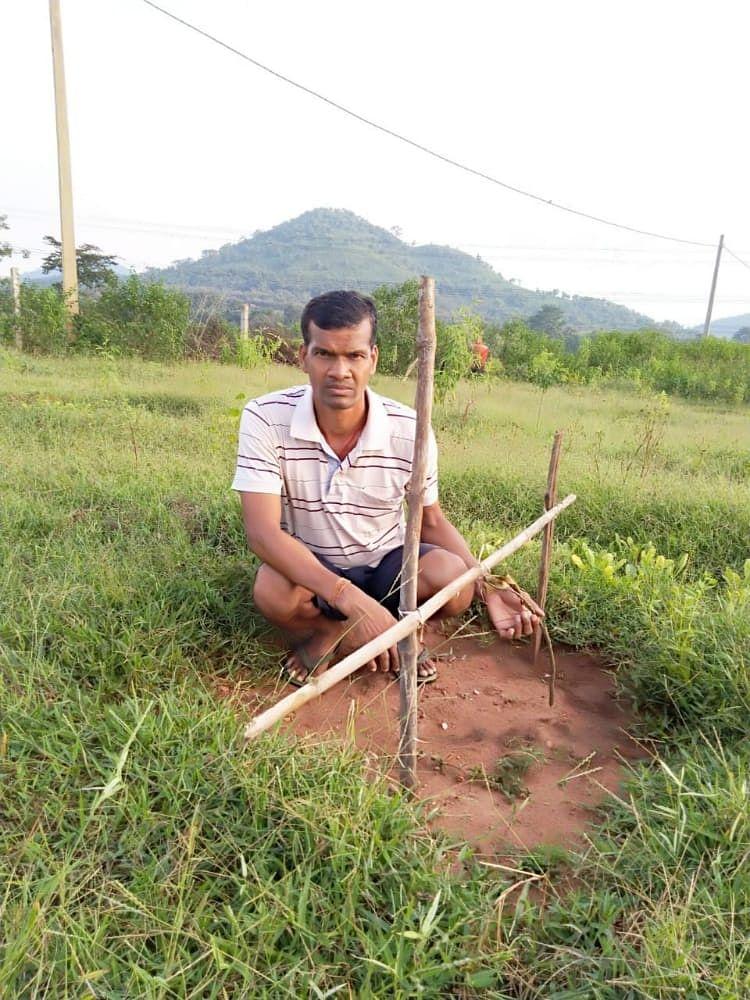 बिरसा हरित ग्राम योजना : कोरोना काल में रोजगार देने की थी योजना, लगने के पहले ही उजड़ गया आम बागान, किसान निराश