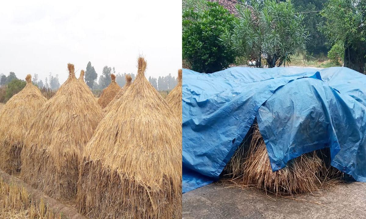 बेमौसम बारिश ने झारखंड के किसानों की बढ़ाई चिंता, हल्की बूंदा- बांदी के साथ छाये रहे बादल, पढ़ें पूरी रिपोर्ट