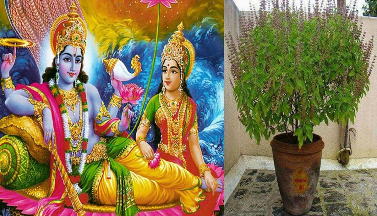 Dev Uthani Ekadashi and Tulsi Vivah 2020 : देवोत्थान एकादशी आज, भगवान विष्णु की पूजा-अर्चना के साथ शुभ मुहूर्त शुरू, आज से बजेगा बैंड बाजा