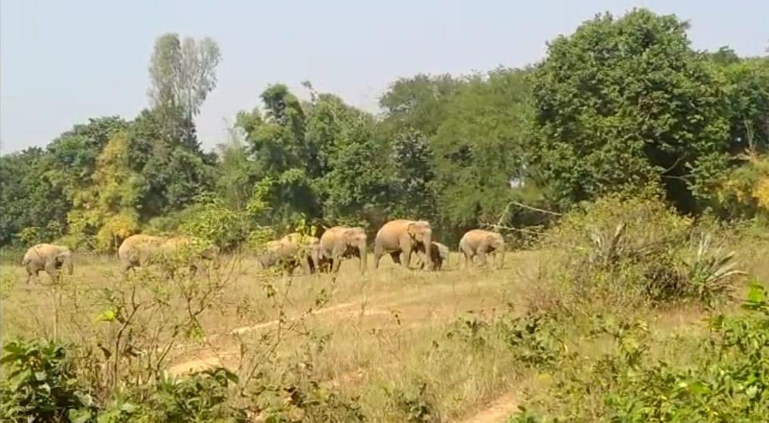 झारखंड में 22 हाथियों का झुंड देख दहशत में ग्रामीण, हाथी भगाओ दल की सक्रियता से लोगों ने ली राहत की सांस