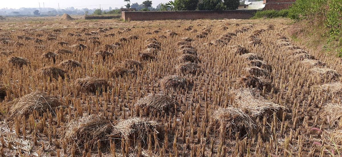 पैक्स में धान बेचने की बाट जोह रहे रामगढ़ के किसान, आधी कीमत पर धान खरीद ले रहे बिचौलिये