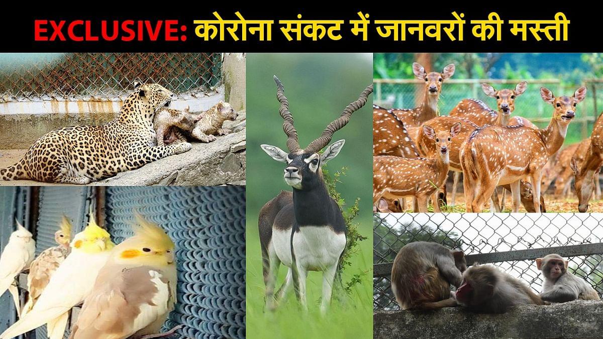 EXCLUSIVE: बोकारो के जवाहर लाल नेहरू जैविक उद्यान में जानवरों ने कुछ ऐसे की मस्ती