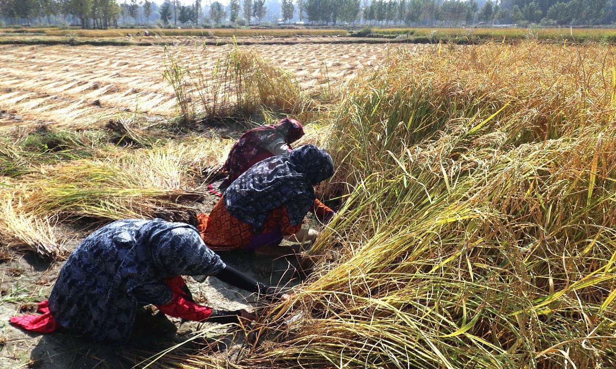 एक दिसंबर से रांची में खुल जायेंगे धान क्रय केंद्र, इन सेंटरों पर जाकर किसान बेच सकते हैं अपना धान