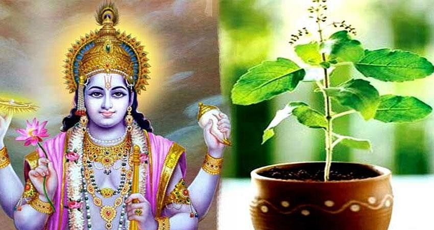 tulsi vivah 2020 date vidhi puja tulsi will take 7 rounds with shaligram know date muhurta marriage method and story rdy | Tulsi Vivah 2020: आज है तुलसी विवाह, जानें पूजा विधि,