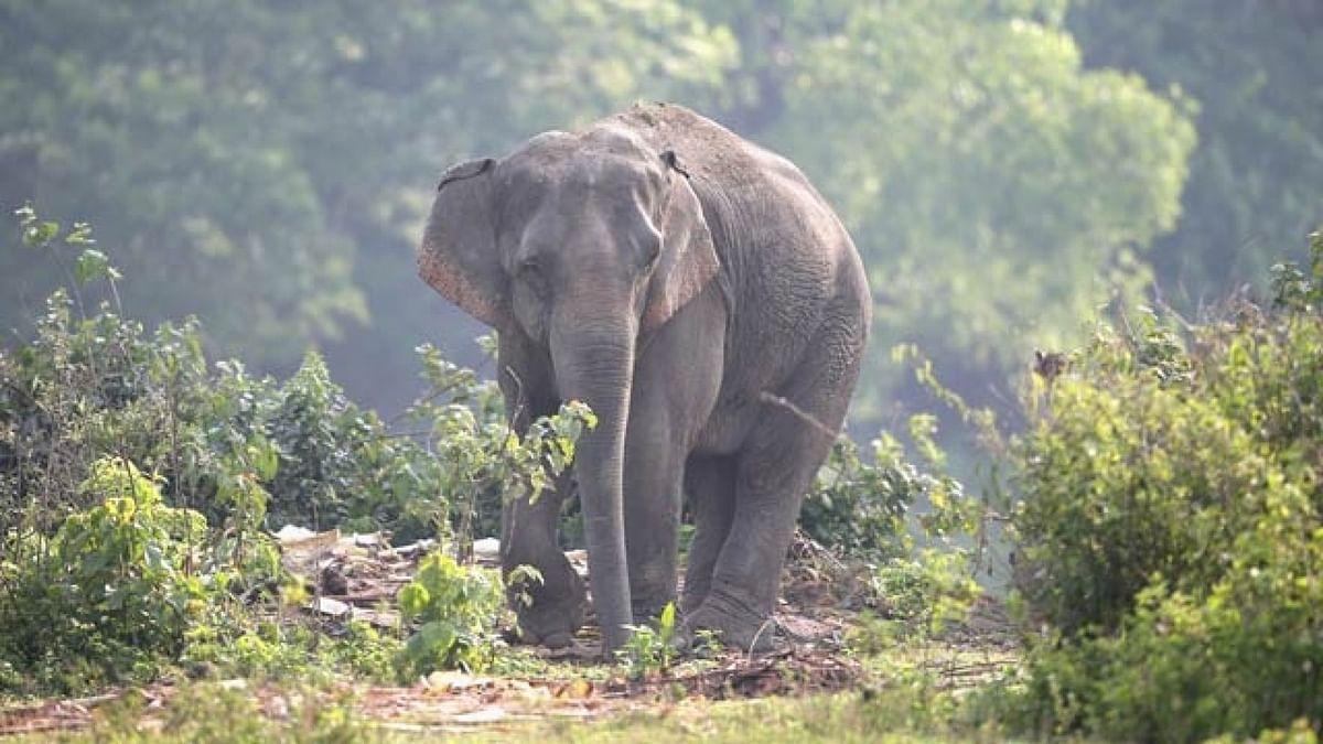 उत्तर बंगाल में करंट लगने से 25 हाथियों की मौत, अब जागी बंगाल सरकार, उठाया ये कदम