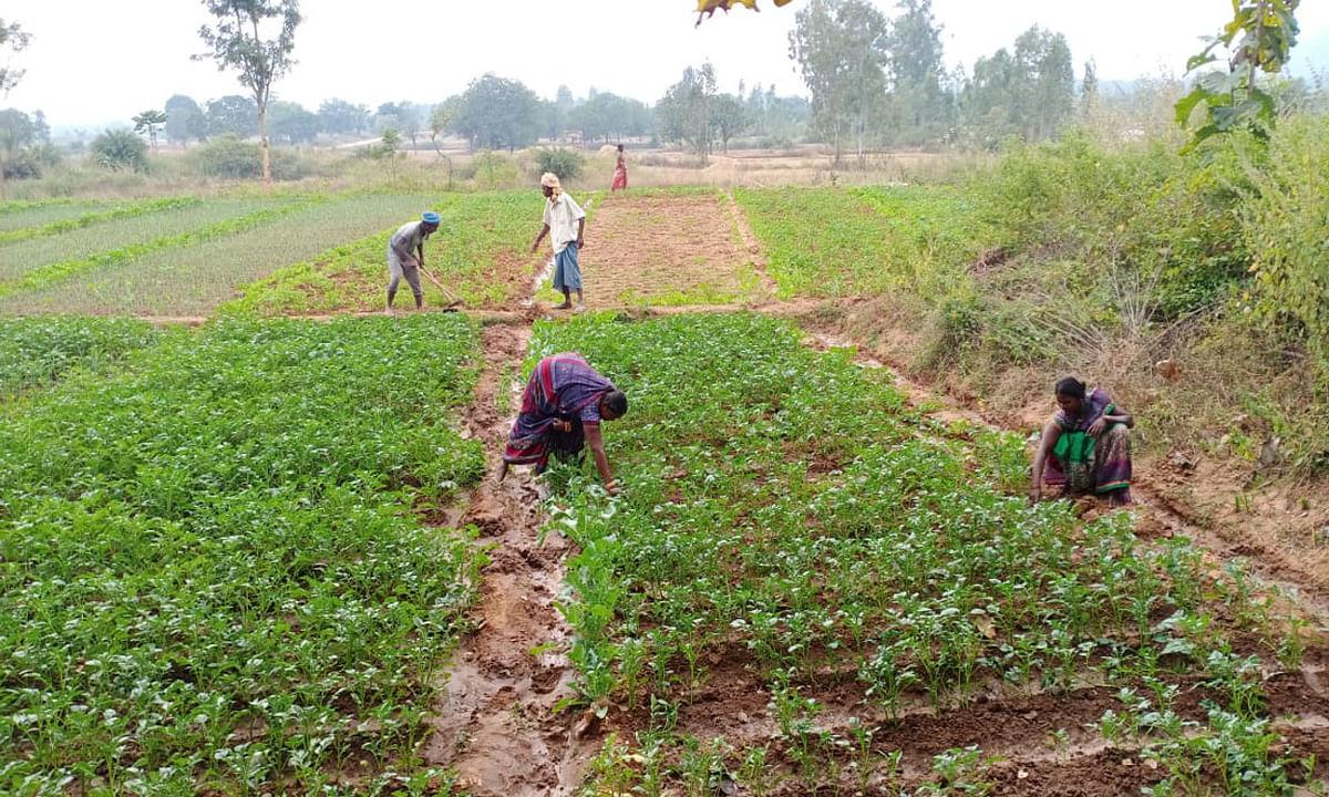 सतबहिया के बिरहोर शिकार छोड़ अब कर रहे हैं खेती-बारी, जैविक खेती पर दे रहे हैं जोर