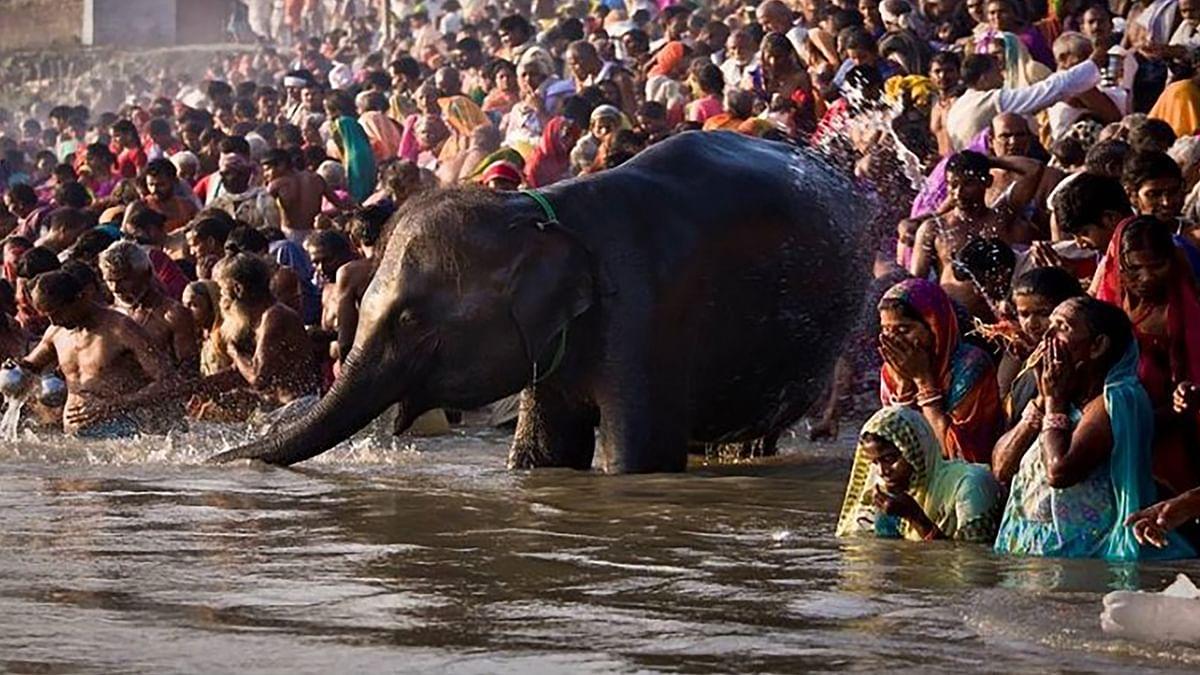जानें इस बार Sonpur Mela 2020 लगेगा या नहीं, कार्तिक पूर्णिमा पर स्नान के बाद शुरू होता है एशिया का सबसे बड़ा पशु मेला