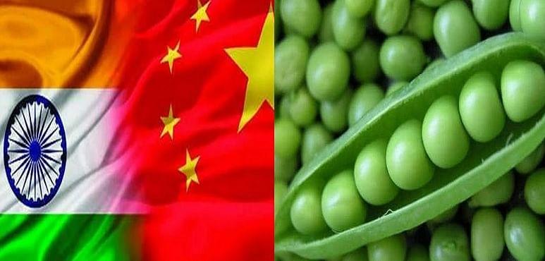 नेपाल के रास्ते बिहारियों की थाली में ज़हर पहुंचाने की साजिश रच रहा चीन, 'चाइनीज मटर' आपको पहुंचा सकता है ये नुकसान...