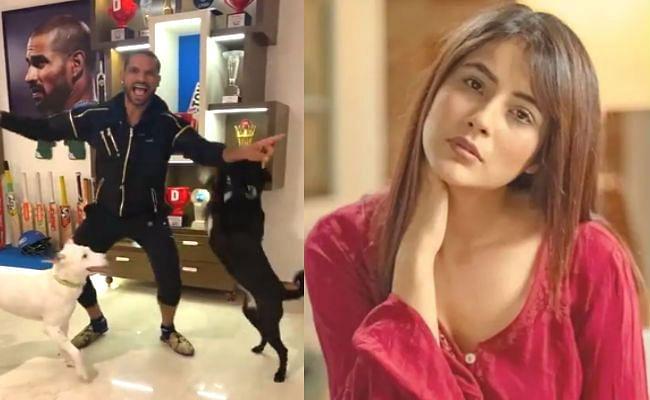 शहनाज गिल के 'त्वाडा कुत्ता टॉमी...' पर शिखर धवन ने बनाया शानदार VIDEO, बिग बॉस एक्ट्रेस ने दिया ऐसा रिएक्शन