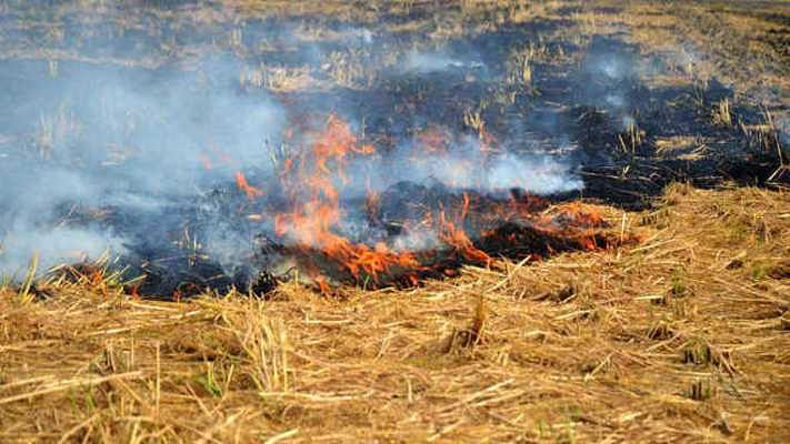 पिछले एक साल में पुआल जलाने की घटना हुई दोगुनी, बिहार सरकार की चेतावनी के बावजूद नहीं मान रहे किसान