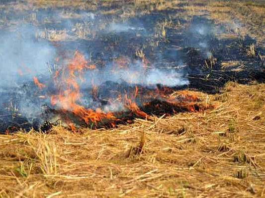 खेतों में पुआल जलाया तो खैर नहीं, चेकिंग के लिए 37 टीमों का गठन, पकड़े जाने पर मिलेगी ये सजा