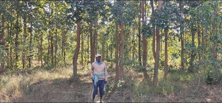 देश सेवा के बाद रिटायर्ड सैनिक बंधन उरांव ने वीरान जंगल में लायी हरियाली, पेंशन की राशि से पढ़े गांव के बच्चे कर रहे विदेश में नौकरी, पढ़िए पूरी कहानी