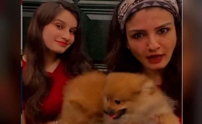 रवीना टंडन ने यश मुखाटे और शहनाज गिल के 'साडा कुत्ता कुत्ता' पर बनाया जबरदस्त VIDEO, क्या आपने देखा?