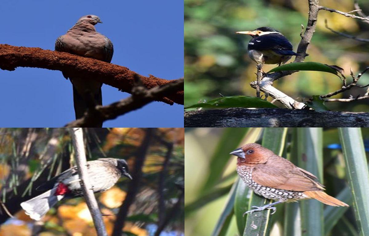 प्रवासी पक्षियों के लिए गुमला का मौसम अनुकूल, जिले के जंगलों में कइयों ने बनाया बसेरा
