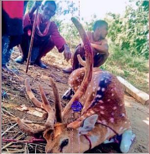 गया के डुमरिया में हुआ हिरण का शिकार, आरोपित गिरफ्तार