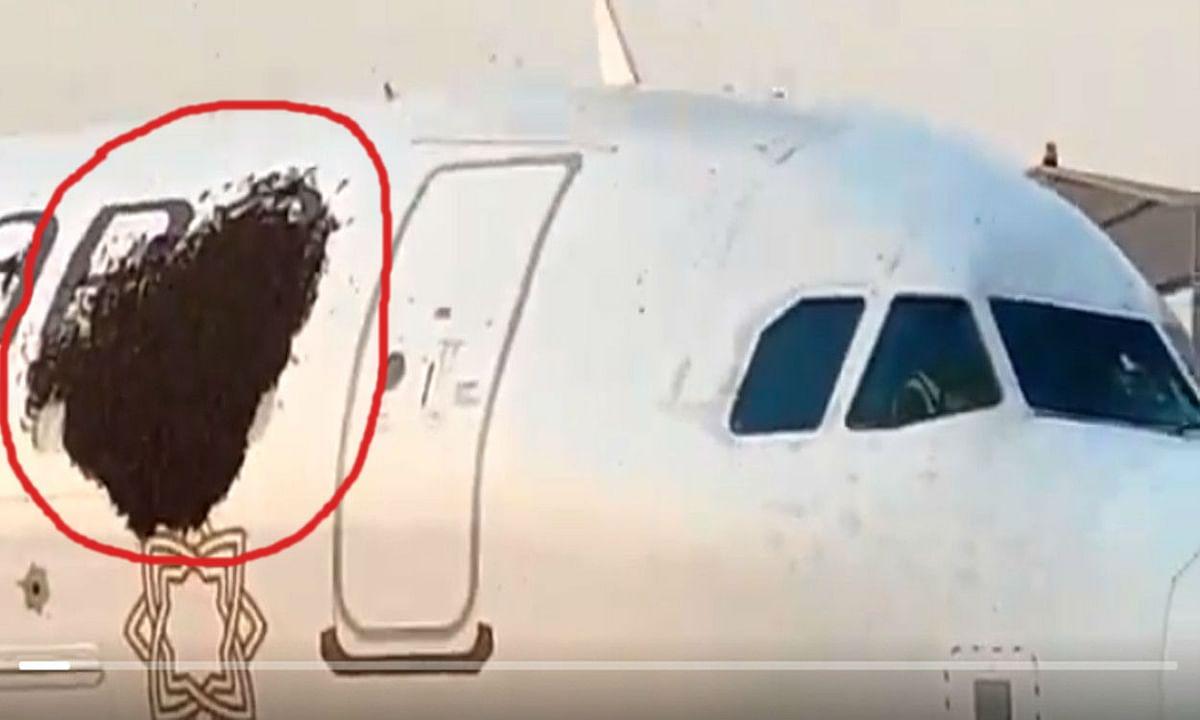 कोलकाता एयरपोर्ट में मधुमक्खियों ने रोकी 2 विमान की उड़ान, सुरक्षाकर्मियों को करनी पड़ी काफी मशक्कत
