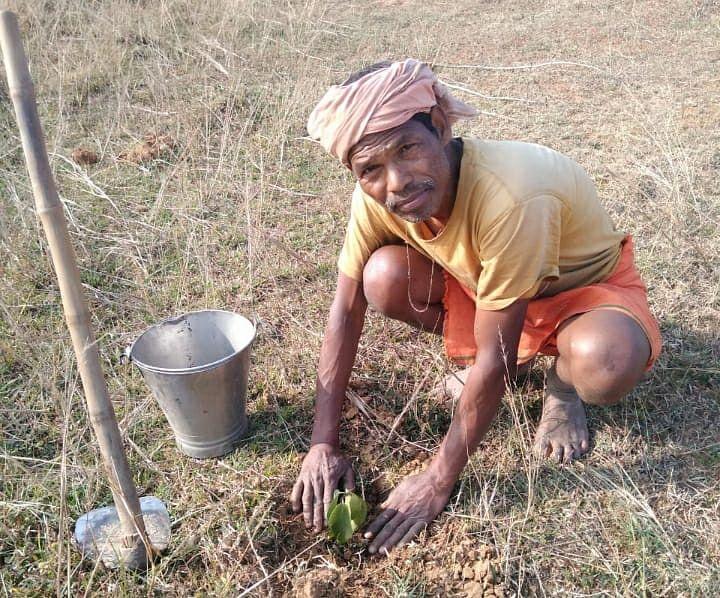 Self Employment Mantra : झारखंड के ग्रेजुएट किसान चंद्रशेखर रोजाना करते हैं पौधरोपण, पलायन करने वाले युवाओं को दे रहे स्वरोजगार का मंत्र