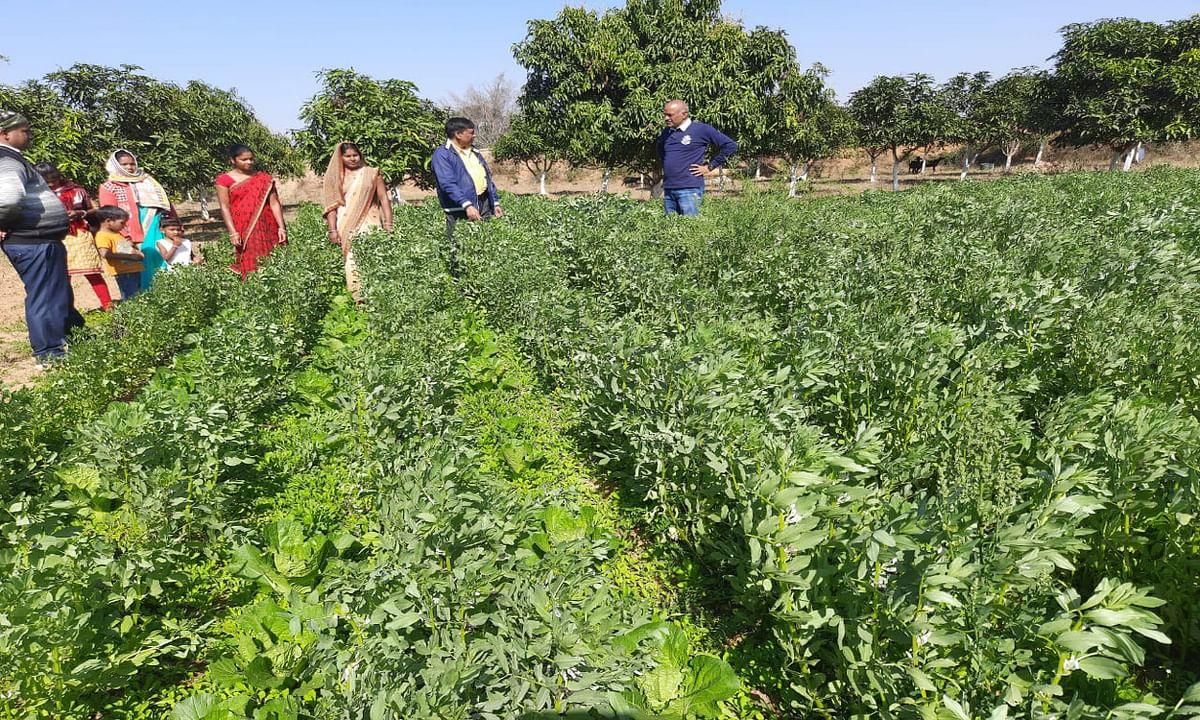 खेती कर आत्मनिर्भर हो रहे हैं कैरो के किसान, दूसरे राज्यों की तरफ नहीं कर रहे हैं पलायान
