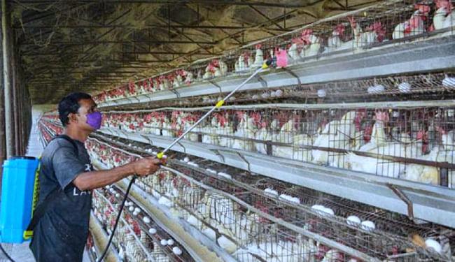 केंद्र सरकार ने देश के नौ राज्यों में बर्ड फ्लू की पुष्टि की, 12 राज्यों के पक्षियों में मिले संक्रमण