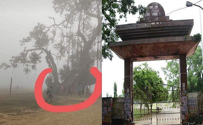 बिहार में 200 साल पुराने बरगद पेड़ को बचाने की उठी मांग, ब्रिटिश जज के साथ जुड़ी है ऐतिहासिक कहानी,