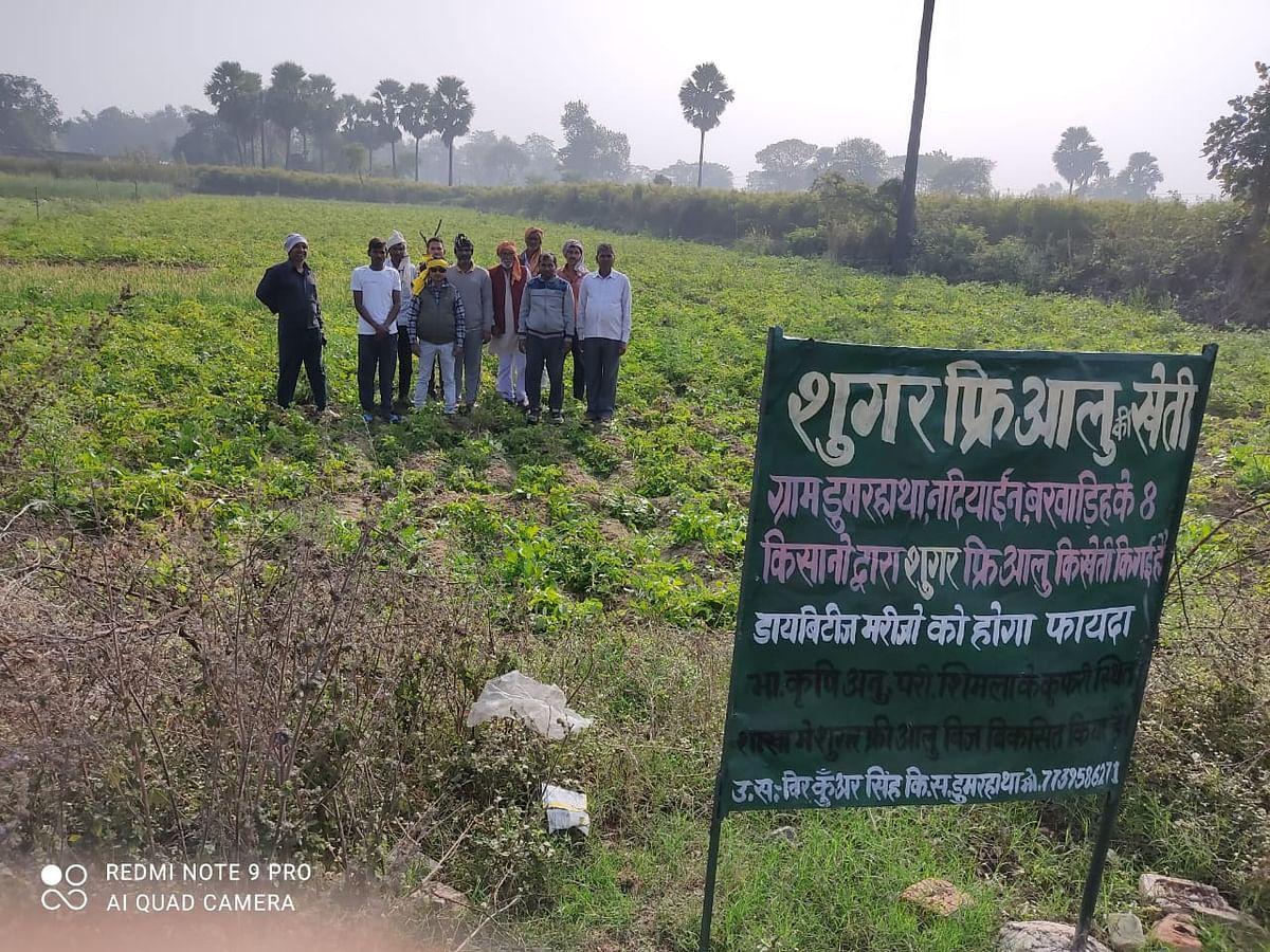 Sugar Free Potato News : झारखंड के पलामू में हो रही शुगर फ्री आलू की खेती, पढ़िए कैसे किसानों का यह प्रयोग बना चर्चा का विषय