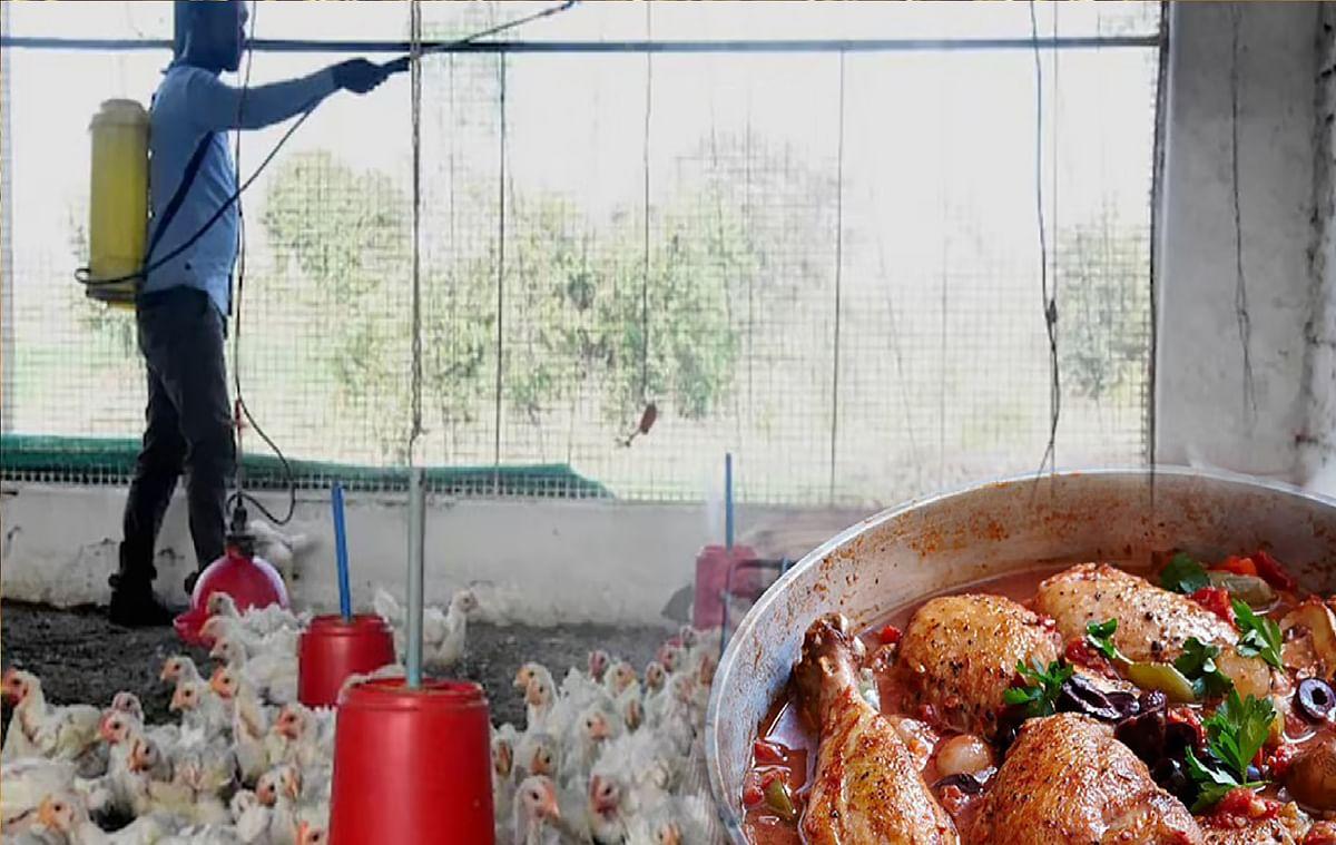 Bird Flu News 2021 : दिल्ली में खुले पॉल्ट्री मार्केट,सरकार ने कहा इन बातों का रखें ध्यान