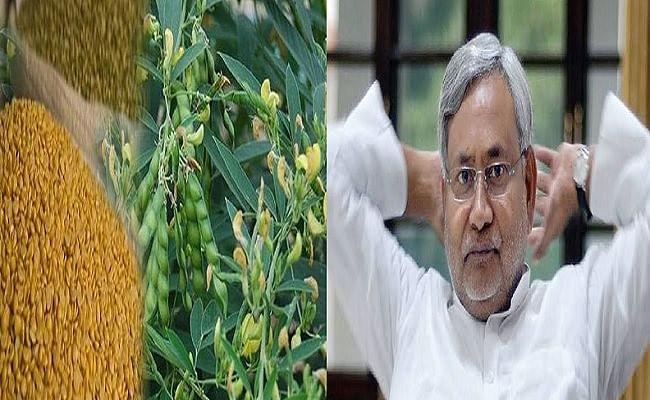 बिहार में पहली बार MSP पर दलहन खरीदेगी सरकार, जानें प्रदेश के किसानों को क्या होगा फायदा...