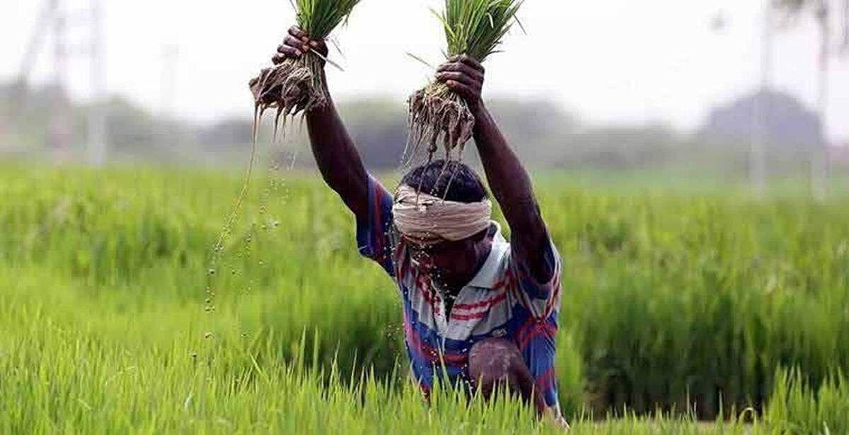 बजट में कृषि क्षेत्र के विकास के लिए अतिरिक्त धन और प्रोत्साहन देने की जरूरत, विशेषज्ञों ने सरकार को दिया सुझाव