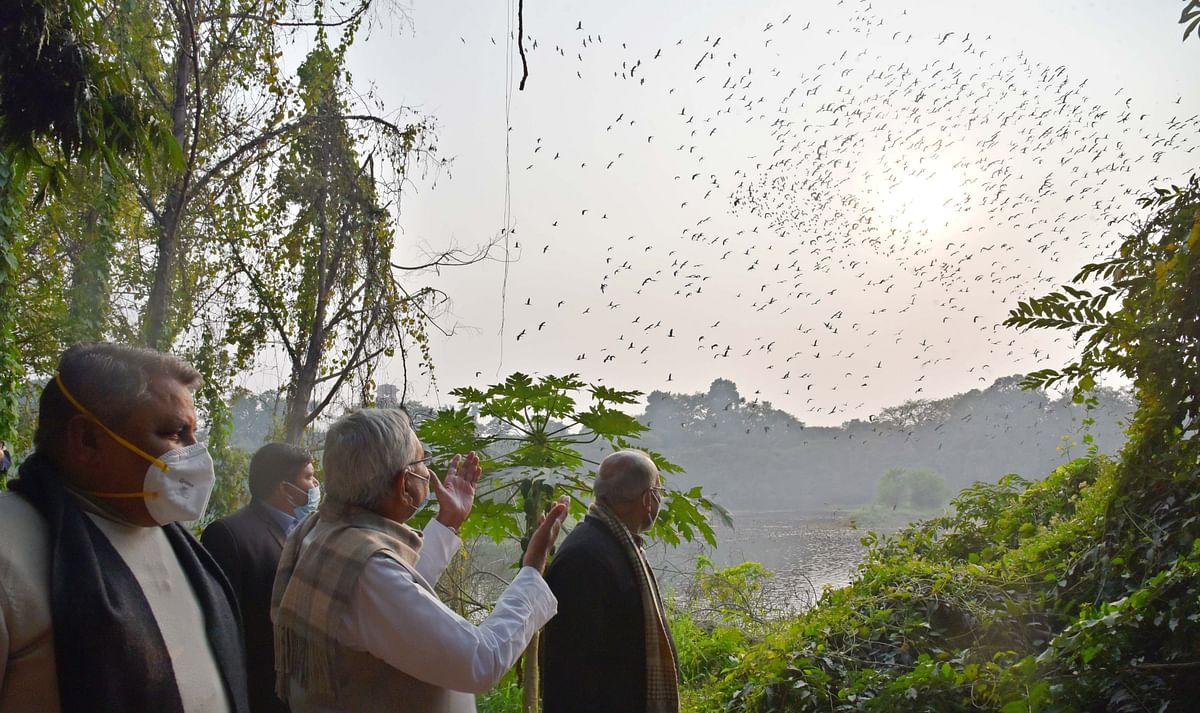 Bihar News: बिहार में कल से पहले 'कलरव' की शुरुआत, सीएम नीतीश करेंगे विदेशी मेहमानों से भरे उत्सव का आगाज
