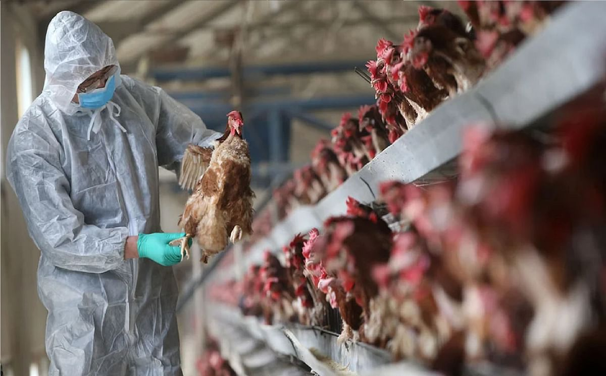 Bird Flu News : कितना खतरनाक है बर्ड फ्लू, किन राज्यों में है ज्यादा खतरा