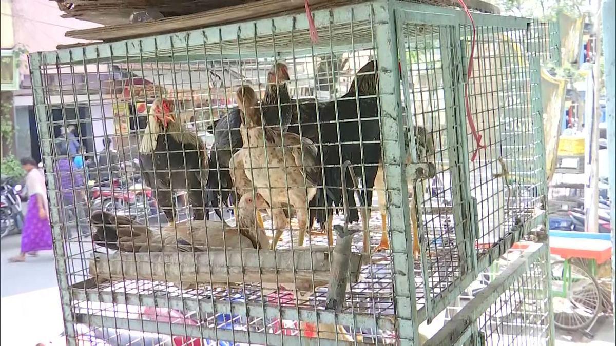 Bird flu का असर मुर्गे-मुर्गियों के दाम में भारी गिरावट, इनकी है बल्ले-बल्ले