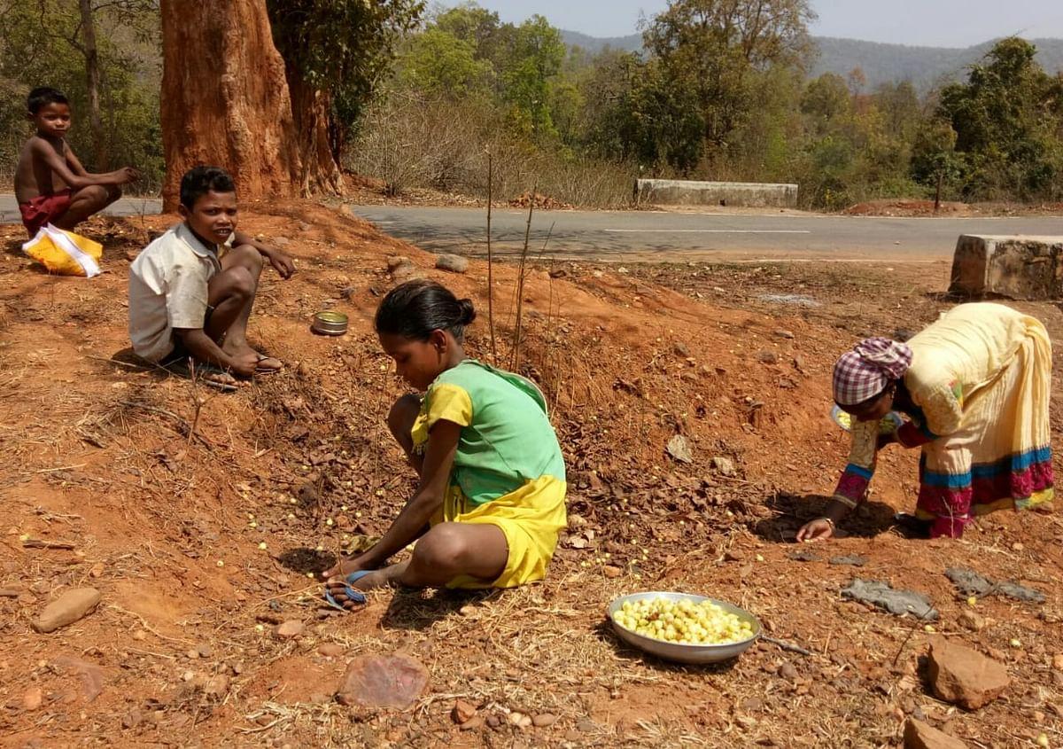 महुआ चुनते ग्रामीण