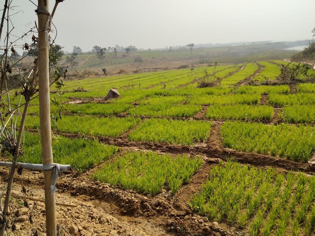 Jharkhand News : बसिया, चैनपुर व गुमला में खुलेगा एग्री क्लिनिक सेंटर, किसानों को इस तरह मिलेगा फायदा