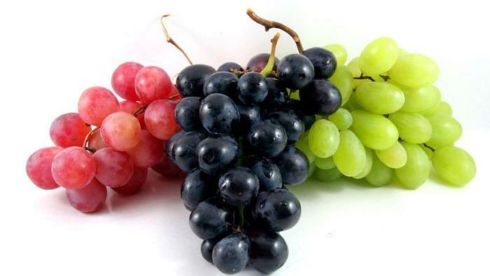 Grapes Side Effects: इन मरीजों के लिए अंगूर का सेवन हो सकता है जानलेवा, जानें किन्हें नहीं खाना चाहिए हरे या काले रंग का अंगूर