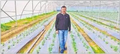 अब धान के कटोरे से छलकेगा 'हरा सोना',   परंपरागत फसल से इतर नयी फसल की खेती से कमा रहे किसान