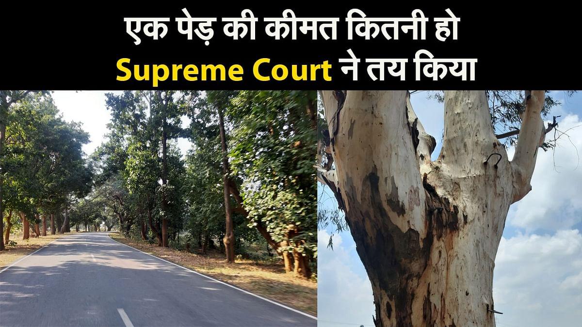 एक पेड़ की कीमत कितनी हो Supreme Court ने तय किया