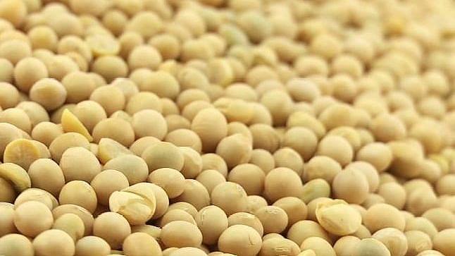 ज्यादा मात्रा में Soyabean का सेवन महिलाओं और पुरुषों को इन 9 तरीकों से पहुंचाता है नुकसान, इन स्थितियों में हो सकता है  स्वास्थ्य के लिए खतरनाक