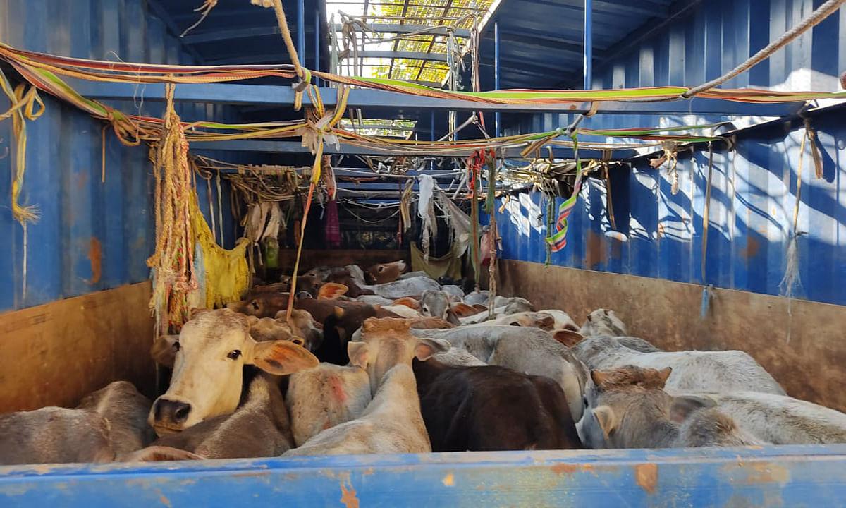 Jharkhand Crime News : अवैध मवेशी तस्करी का झारखंड- बिहार कनेक्शन, रामगढ़ के गोला में डाक पार्सल कंटेनर समेत 4 आरोपी गिरफ्तार