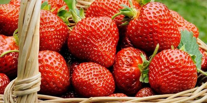 गुमला में पांच हेक्टेयर में होगी स्ट्रॉबेरी की खेती, इतने स्ट्रॉबेरी के पौधे लगाने की है योजना