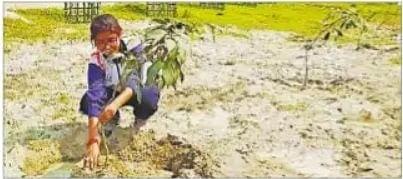 मनरेगा में लगवाएं निजी भूमि पर पौधे, बिहार सरकार पांच साल करेगी देखभाल