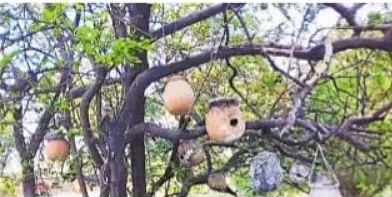 गौरैया को बचाने में लगा है बिहार यह गांव, पक्षियों  पर नजर रखने को लगा रखे हैं सीसीटीवी कैमरे