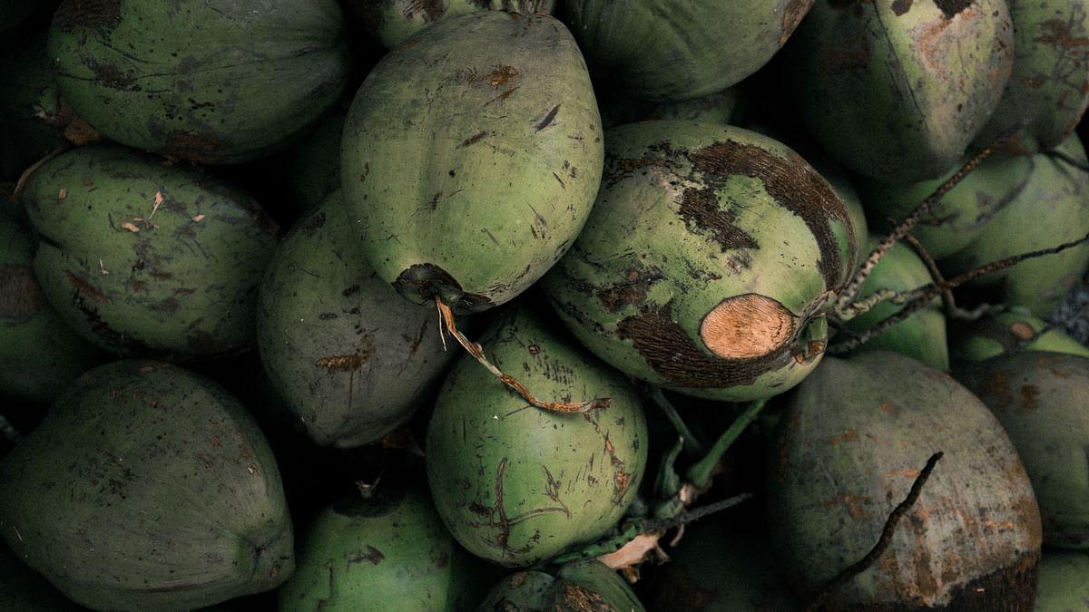 Diabetes में Nariyal Pani Ke Fayde: मधुमेह समेत कई रोगों का रामबाण इलाज है नारियल पानी, जानें एक दिन में कितना पीना चाहिए