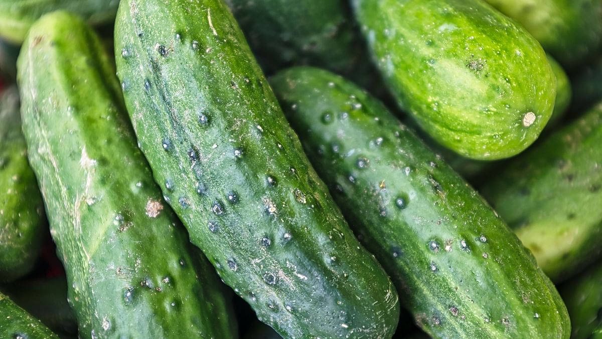 Cucumber Side Effects: खीरे में पाए जाता ये Toxins, सांस की समस्या समेत इन मामलों में आपके लिए हो सकता है जहरीला