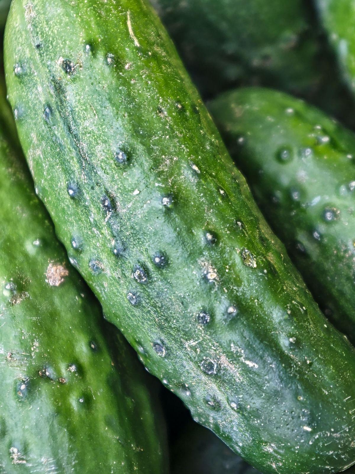 cucumber side effects