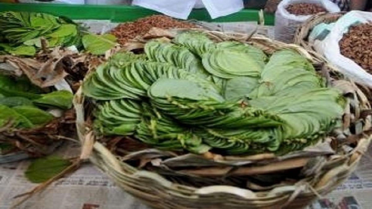 Bihar News: बिहार की शान मगही पान की अब होगी विदेशों में सप्लाई, चमकेगी किसानों की किस्मत